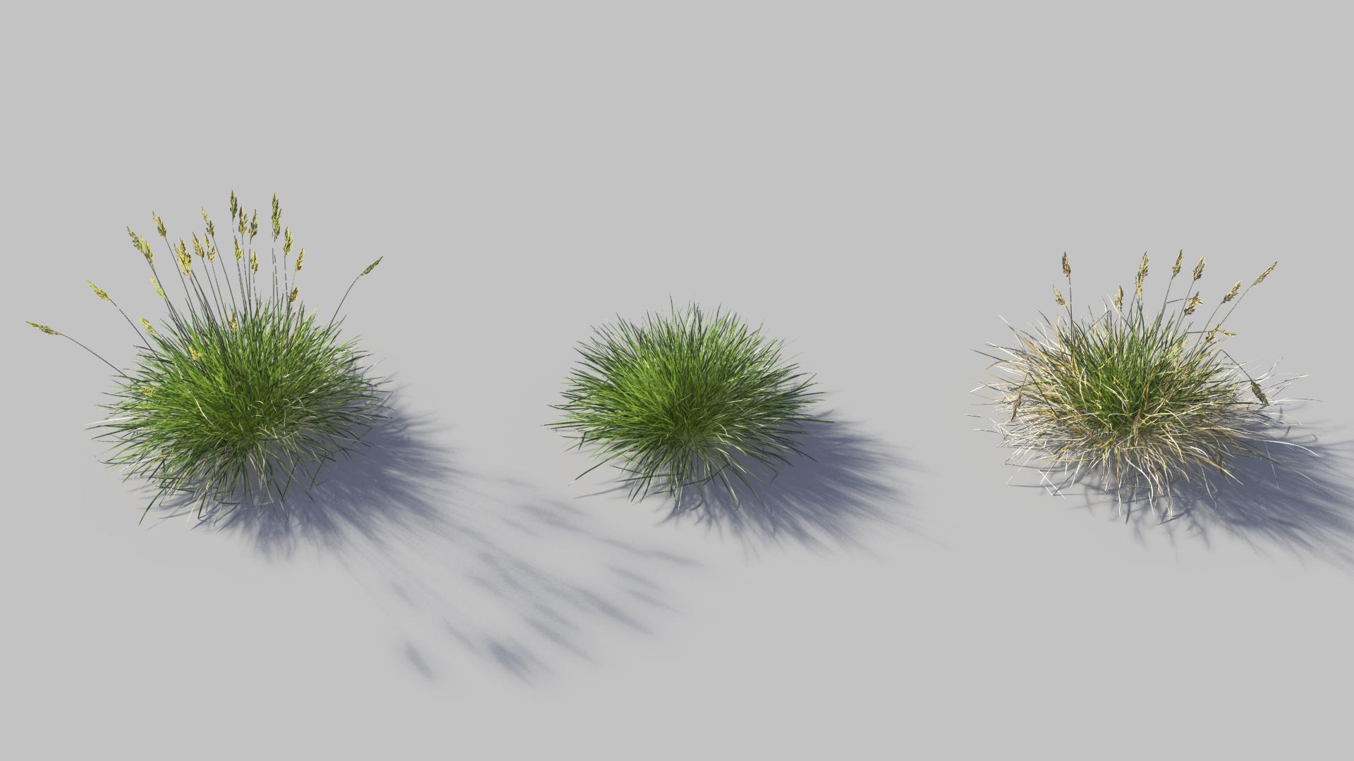 3D model of the Spiky fescue Festuca gautieri