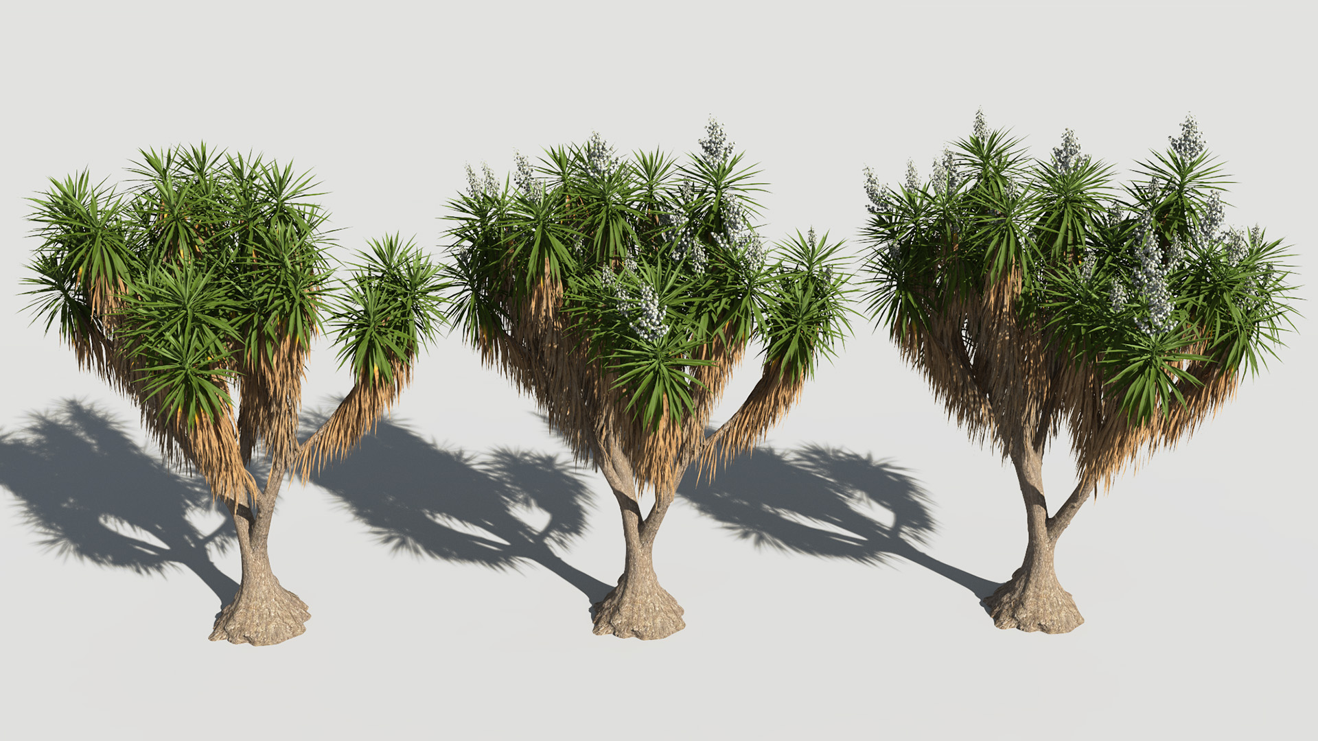 3D model of the Spineless yucca Yucca elephantipes