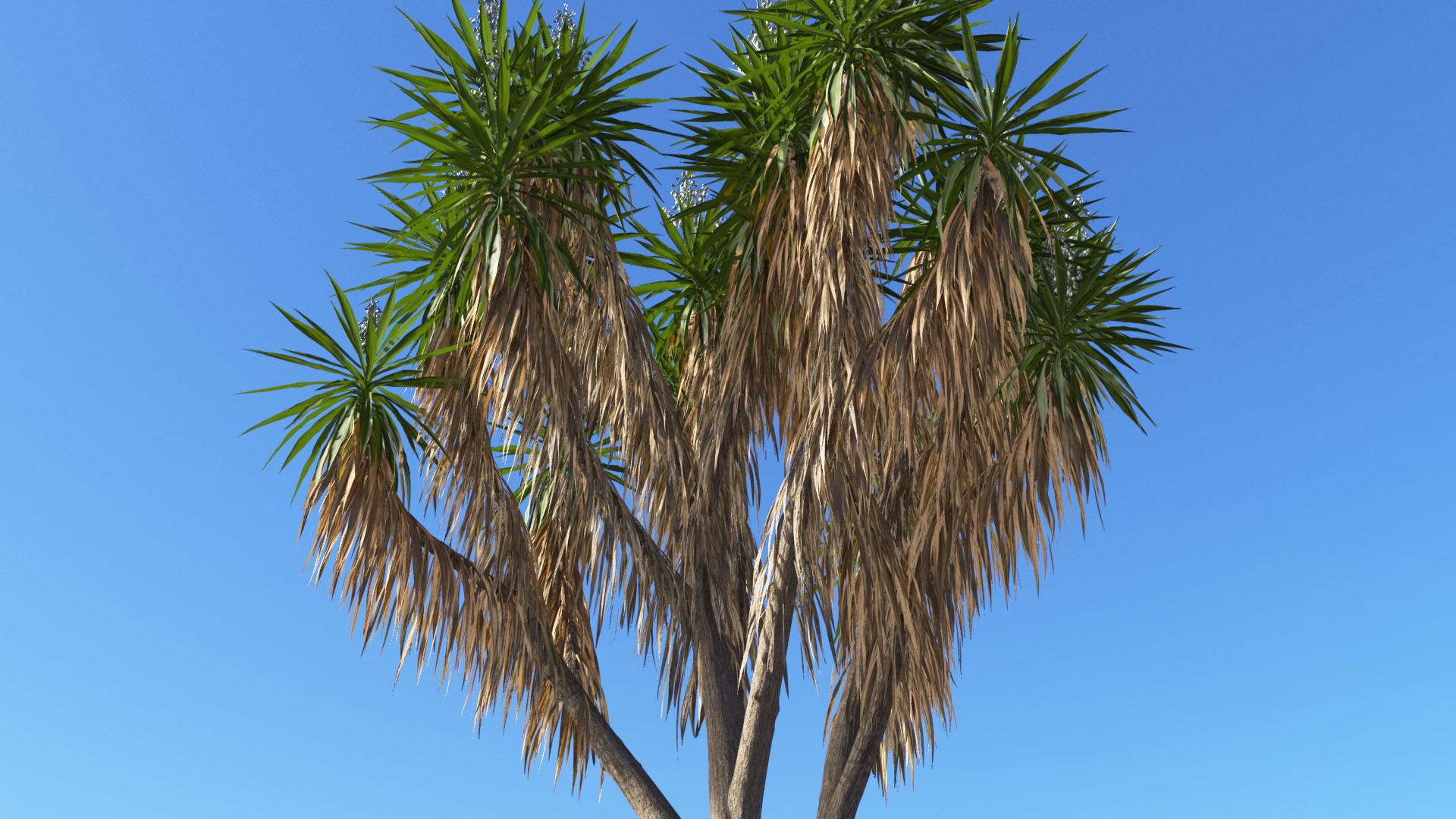 3D model of the Spineless yucca Yucca elephantipes close-up