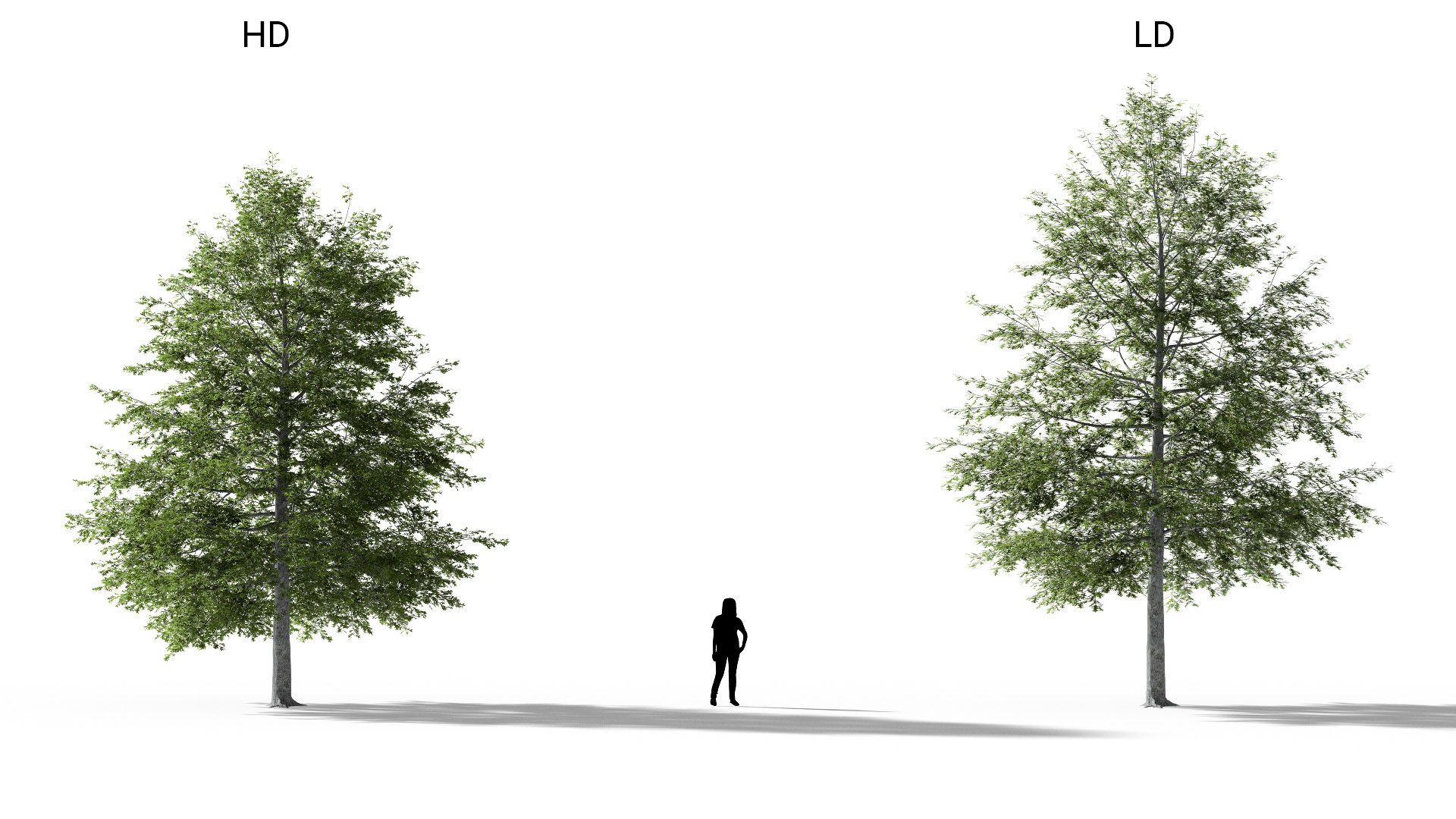 3D model of the Swamp oak Quercus palustris included versions