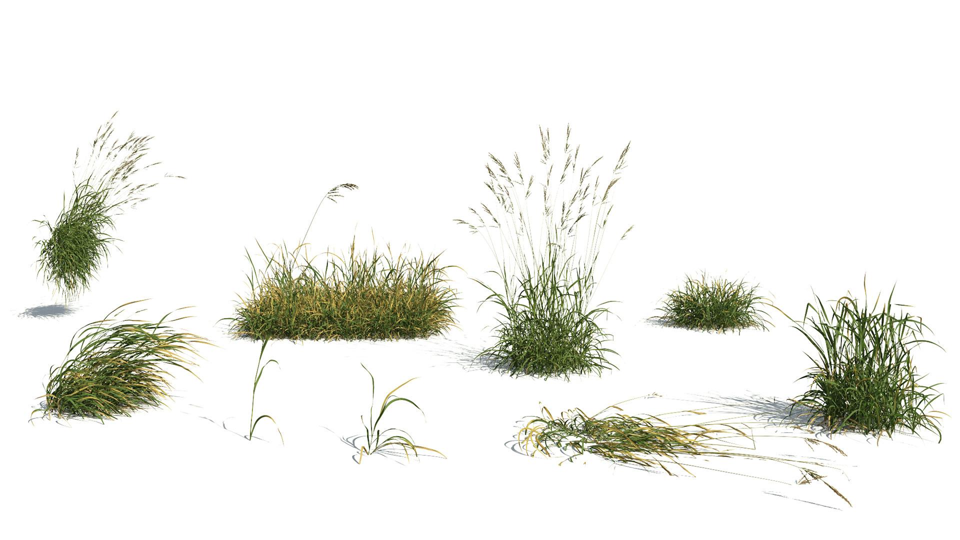 sementi per prato