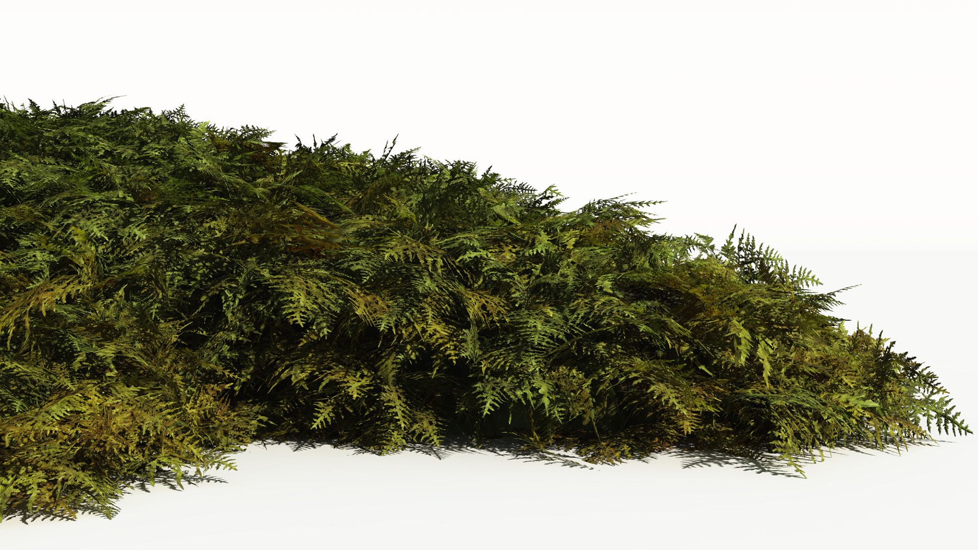 3D model of the Tamarisk moss Thuidium tamariscinum