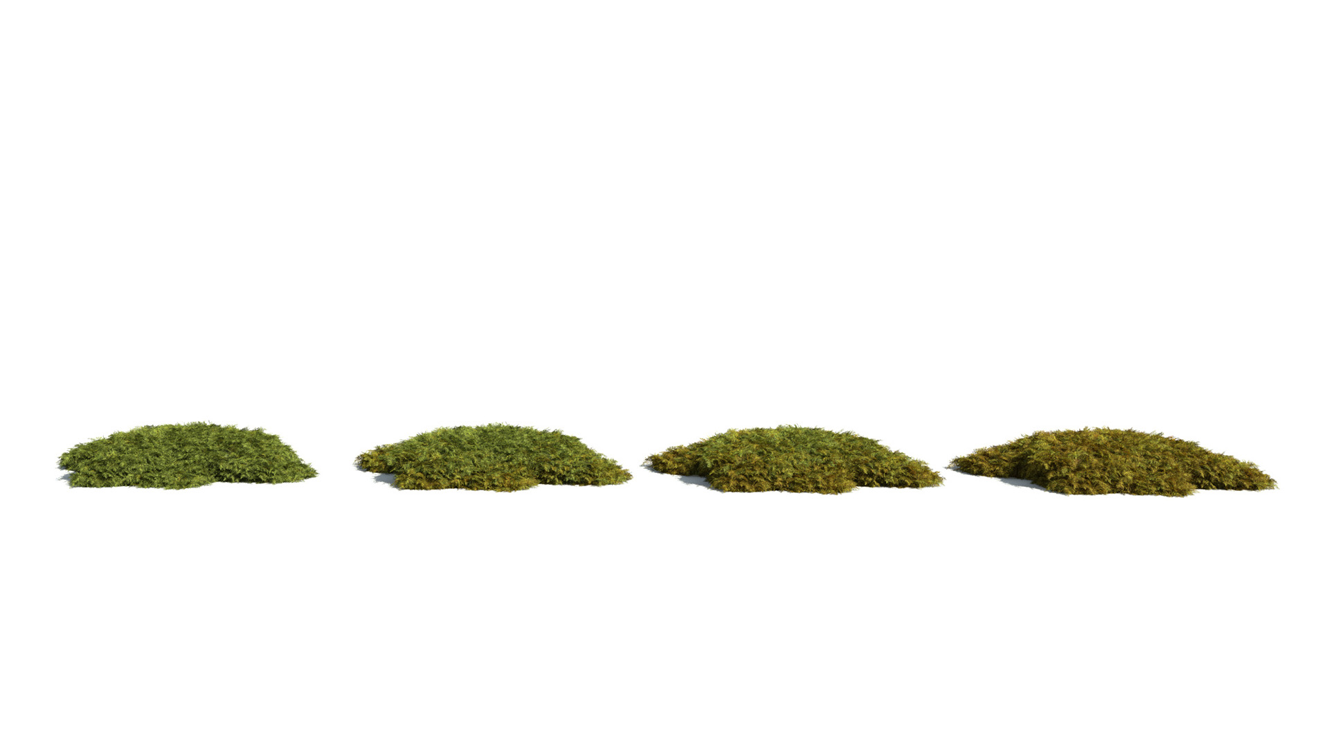 3D model of the Tamarisk moss Thuidium tamariscinum health variations