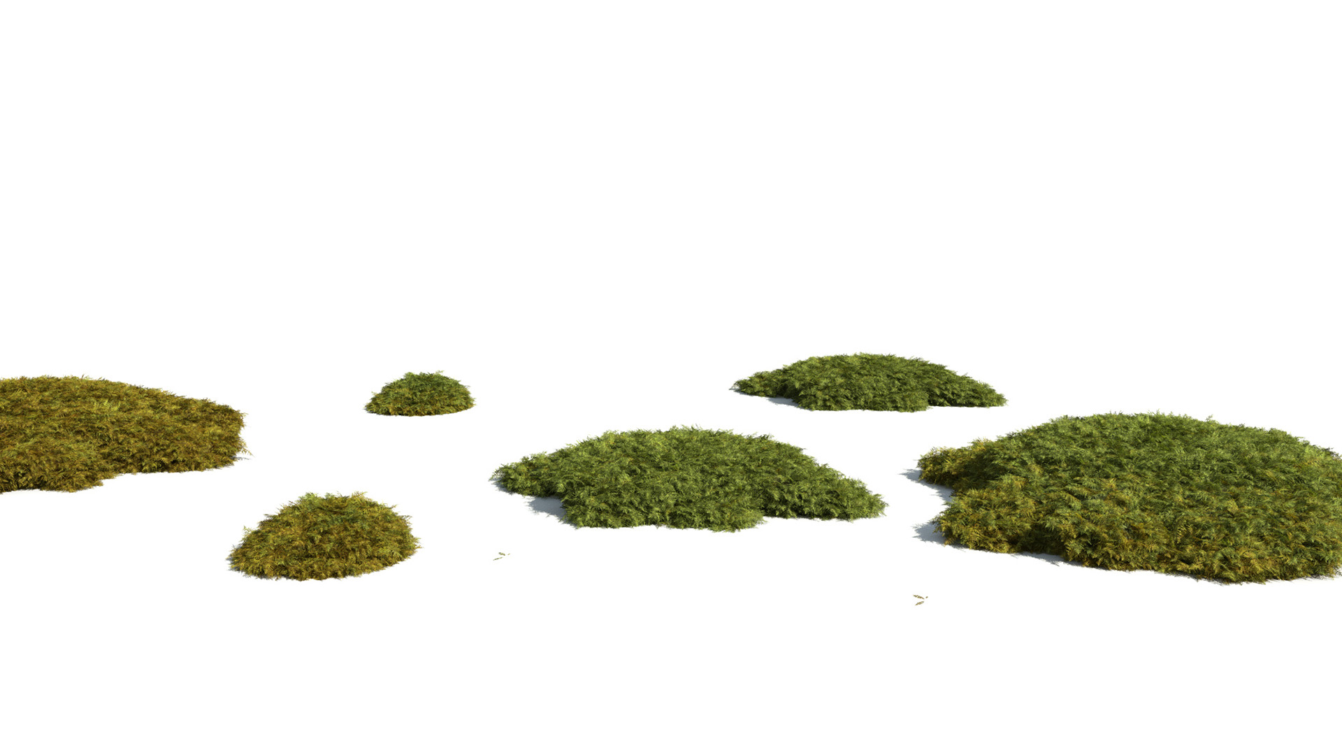 3D model of the Tamarisk moss Thuidium tamariscinum different presets