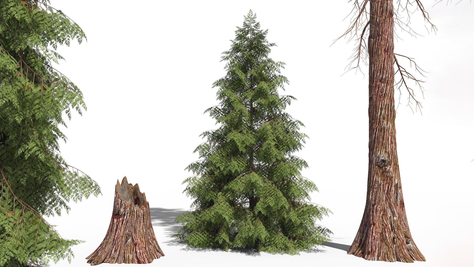 3D model of the Western red cedar Thuja plicata different presets