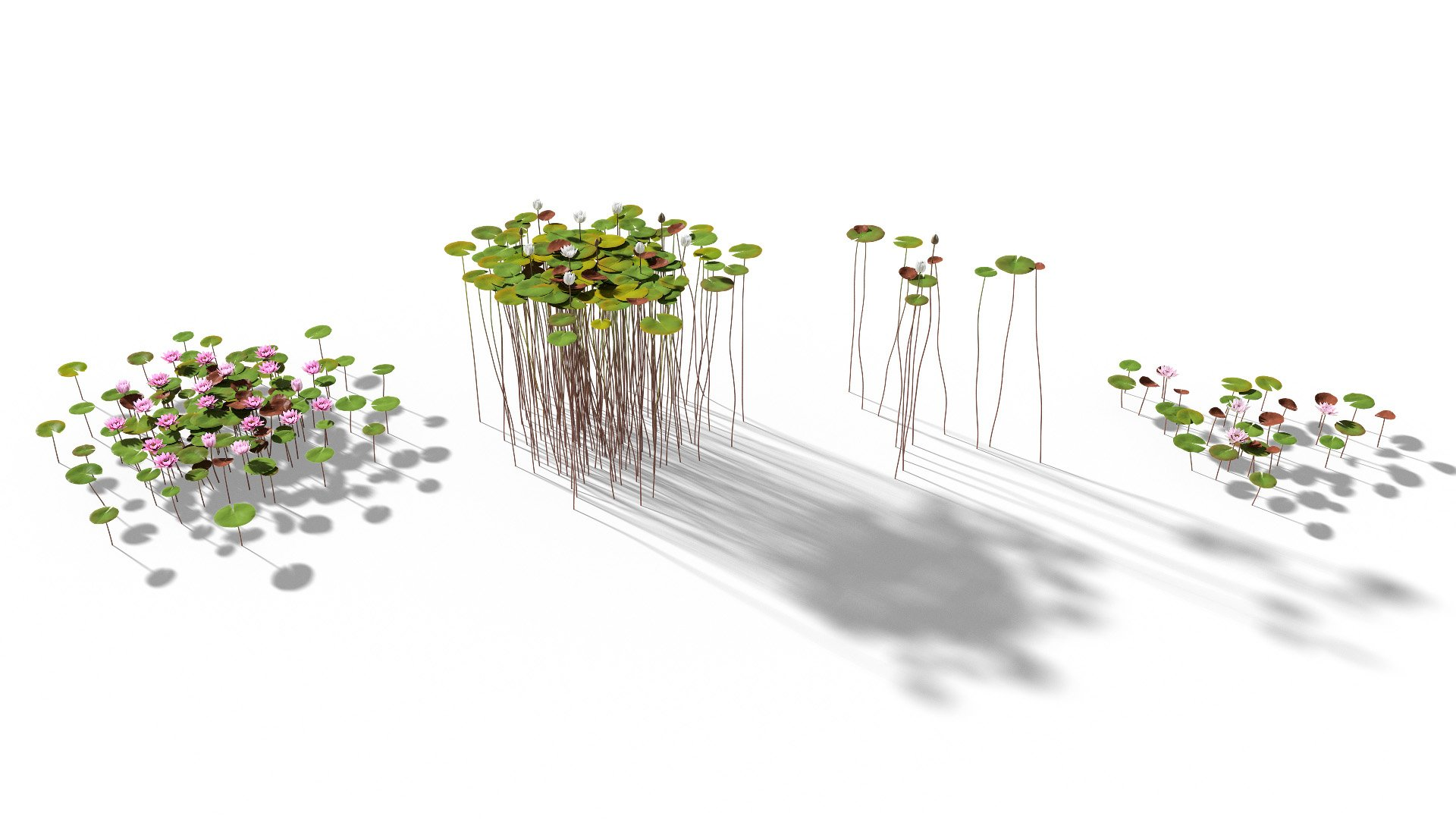 3D model of the White water lily Nymphaea alba published parameters