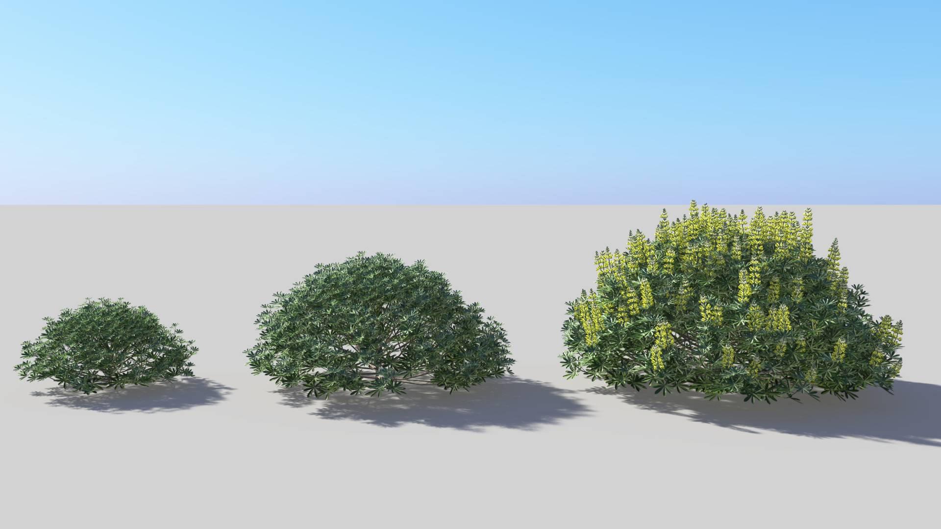 3D model of the Yellow bush lupine Lupinus arboreus