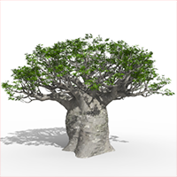 3D model of the African continental baobab - Adansonia digitata - from the PlantCatalog, rendered in VUE